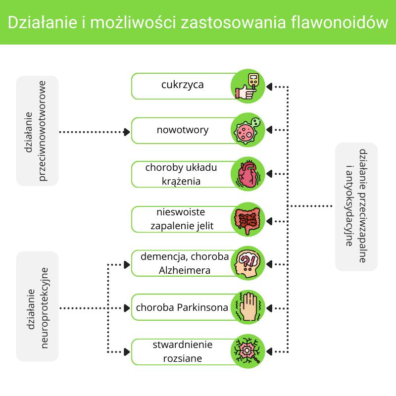 Działanie i zastosowanie flawonoidów